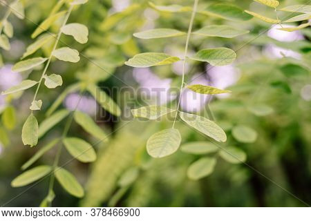 Green Forest Nature Background. Nature Background Of Forest. Tree Leaves In Forest Nature Background