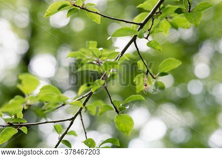 Green Forest Nature Background. Nature Background Of Spider On Tree Leaves. Forest Leaves Nature Bac