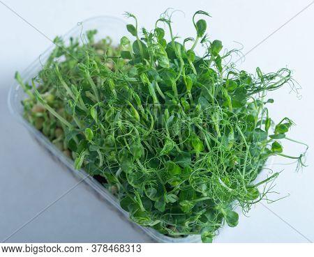 Veganism. Healthy Eating. Microgreen Peas In Tray.