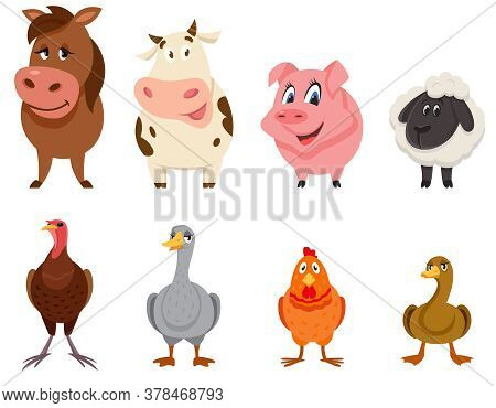 Set Of Farm Animals Front View. Female Characters In Cartoon Style.