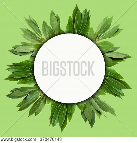 Creative Layout Of Laurel Leaves With A Note Card. Flat Lay. Nature Concept.