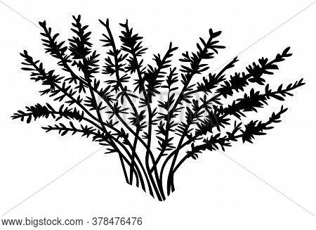 Black Silhouette Of Bush. Leaves At Bush Branches. Simple Raster Icon. Nature Concept. Black Plant I