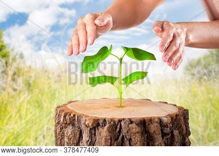 Concept Eco Earth Day. Hands Protective Green Plant And People For Nature Help. Protect Nature.