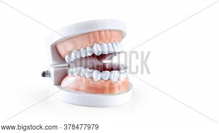 Dentist Equipment, Dentistry Instruments Or Dental Hygienist Checkup Dentures Teeth Model Isolated O