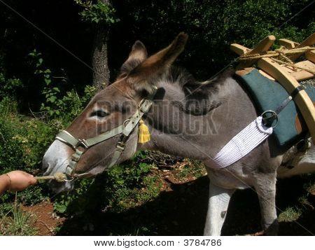 Working Donkey