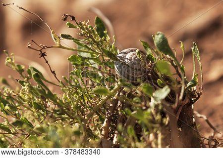 Conch Snail On A Green Bush At Sunset. Nice Bokeh.