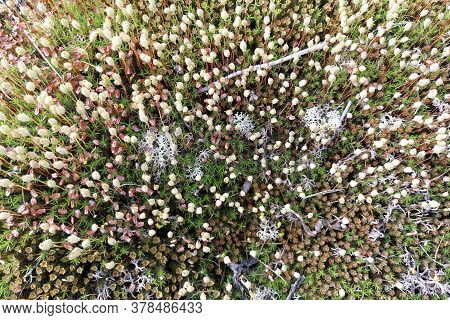 Diverse Vegetation Of The Northern Tundra. Small Plants, Flowers And Mosses. Unique Flora Of The Arc