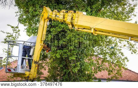 Arborist Man In The Air On Yellow Elevator, Basket With Controls, Cutting Off Dead Cherry Tree, With