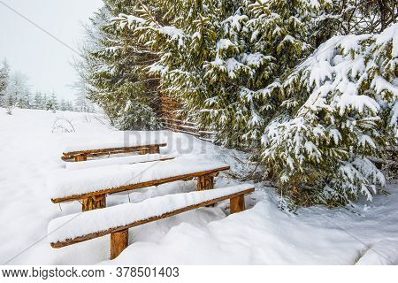 Snow-covered Benches Stand In High Snowdrifts Near Snow-covered Majestic Fir Trees On A Frosty Winte