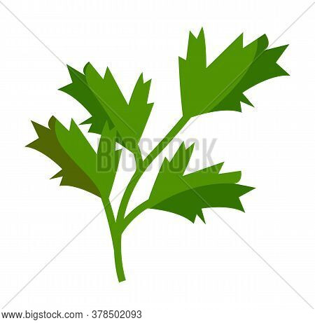 Isolated At White Background Green Parsley Icon. Natural Organic Greenery For Salad Or Culinary. Hea