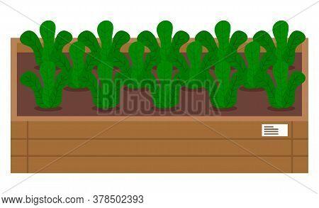 Vegetable Garden Flat Vector Illustration. Plants In The Garden Bed. Vegetable Plant With Green Larg