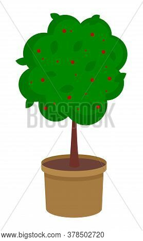 Isolated Green Tree Growing In Pot With Soil. Tree With Red Flowers Isolated At White Background. Gr
