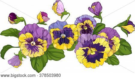 Flower Arrangement Of Pansies Isolated On A White Background. Bouquets Viola, Yellow And Purple Flow