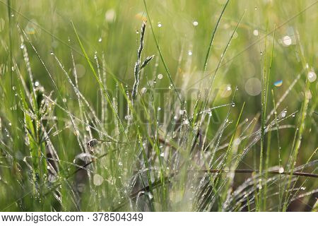 grass with waterdrops on morning meadow