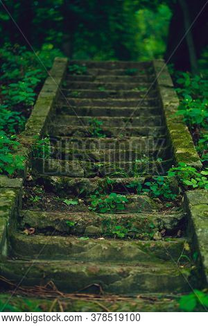 Close Up Of Old Stone Stair In Park. Abandoned Overgrown Steps In Wooded Area.