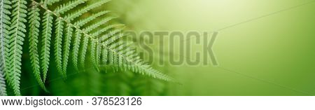 Fern leaf  in tropical forest plants. Nature green horizontal background. Soft focus.