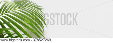 Palm leaf on empty gray wall. Nature long horizonta background.