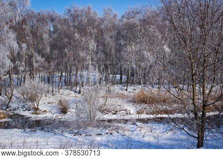 Beautiful Winter Landscape Of A Snowy Birch Grove.