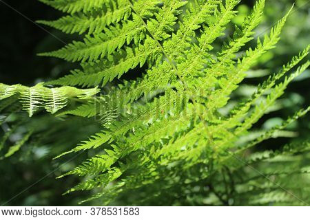 Fern Leaves In A Dark Forest Lit By Bright Beams Of Light