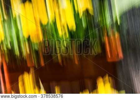 Close Up. Blurred Motion  Flowerbeds, Abstract Background Image. Yellow And  Green  Flowers Backgrou