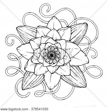 Beautiful White Water Lily For Tattoo Or T-shirt Design. Symbol Of Purity, Integrity And Holiness. S