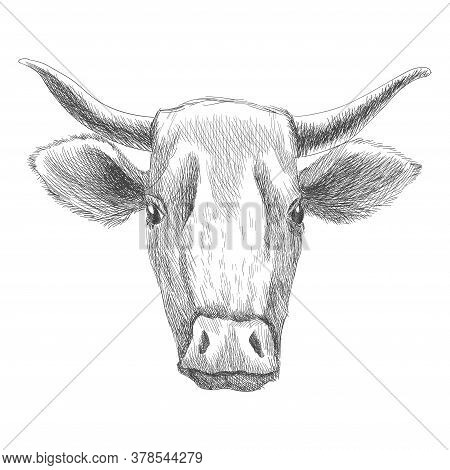 Hand Drawn Animal. Farm Livestock. Vintage Vector Engraving Illustration For Poster Or Web. Hand Dra