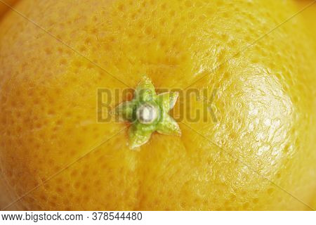 An Extreme Close-up Or Macro Shot Of The Top Portion Of The Skin And Rind Of A Fresh, Organically Gr