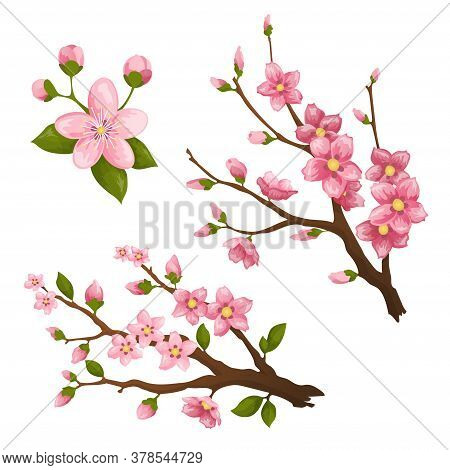 Sakura. Beautiful Print With Blossoming Dark And Light Pink Sakura Flowers. Design Element For Greet