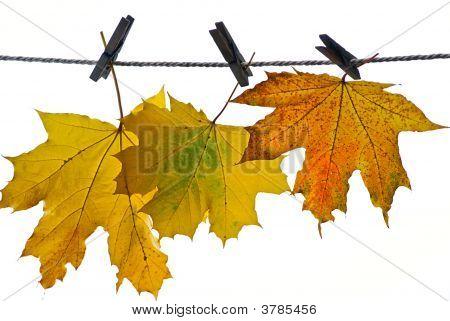 Leaves On Autumn
