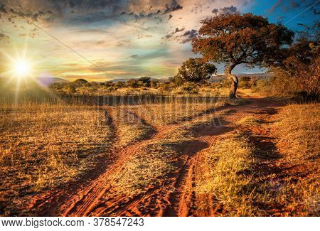 Dirt road and tree in a scenic African sunset landscape