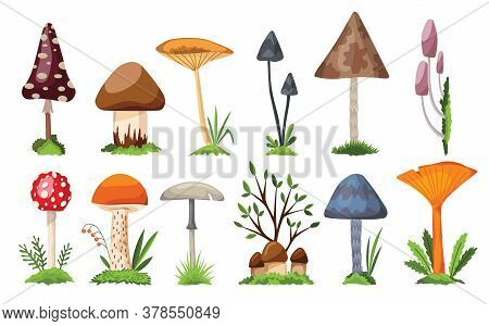Collection Of Mushrooms And Toadstools. Illustration Of The Different Types Of Mushrooms On A White