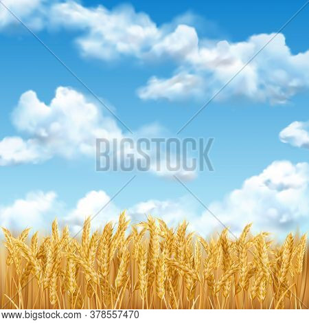 3d Realistic Vector Gold Wheat Field And Blue Sky With Clowds