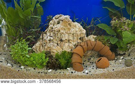 Aquatic Plants And Fish In The Aquarium's Aquarium