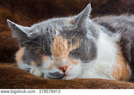 Cute Cat Sleeping On A Woolen Blanket