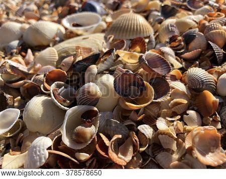 Seashells Background. Beautiful Little Multi-colored Seashells On The Beach On A Sunny Summer Day.
