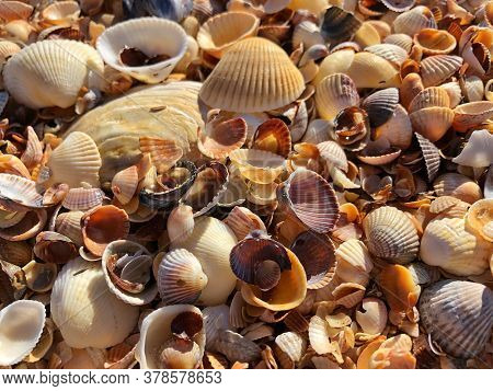 Seashells Background. Beautiful Little Multi-colored Seashells On The Beach On A Sunny Summer Day At