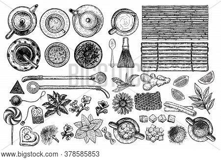 Tea And Herbal Tea Shop Set Vector Illustration. Vector Design With Tea Ingredients. Hand Drawn Sket