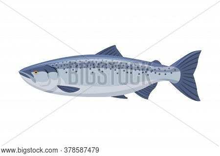 Salmon Fish, Fresh Aquatic Sea Fish Species Cartoon Vector Illustration