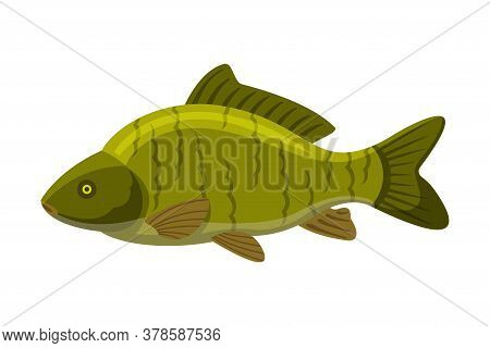 Largemouth Freshwater Fish, Fresh Aquatic Fish Species Cartoon Vector Illustration