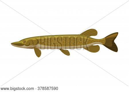 Pike Freshwater Fish, Fresh Aquatic Fish Species Cartoon Vector Illustration