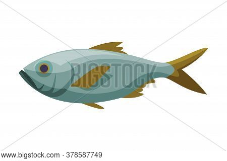 Bream Freshwater Fish, Fresh Aquatic Fish Species Cartoon Vector Illustration