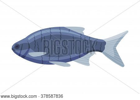 Tilapia Freshwater Fish, Fresh Aquatic Fish Species Cartoon Vector Illustration