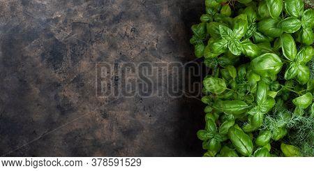 Fresh Green Basil On A Dark Background.