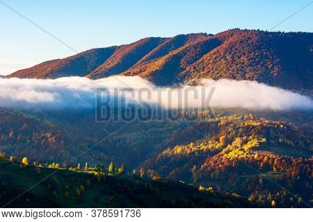 Autumn Sunset In Mountains. Tree Top Among The Fog Rolling Through Hills. Mysterious Nature Scenery