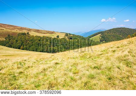 Grassy Meadow In Mountains. Beautiful Landscape Of Transcarpathia On A Sunny Summer Day. Ridge In Th