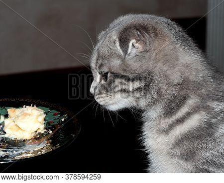 Kitten Eats Cake. The Cat Eats The Sweets. The Blue Kitten.