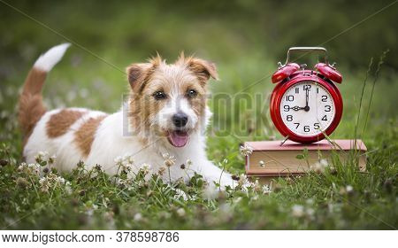 Cute Smiling Happy Jack Russell Terrier Dog Puppy Listening In The Grass With Books And Alarm Clock.