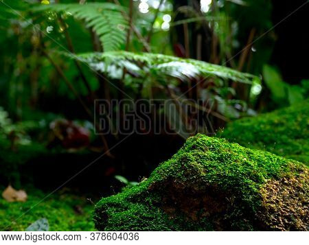 Beautiful Green Moss On The Floor,stone In The Forest, Moss Closeup, Macro. Beautiful Background Of