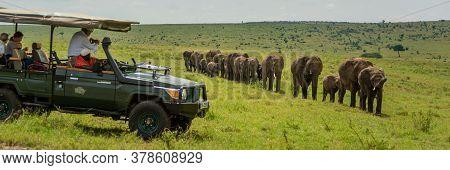 Line Of Elephants Walk Past Safari Truck