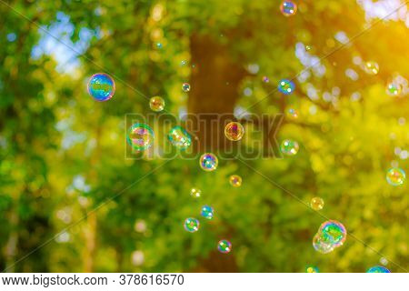 Background Soap Bubbles On The Background Of Trees . Beautiful Color Background. Copy Space. The Con